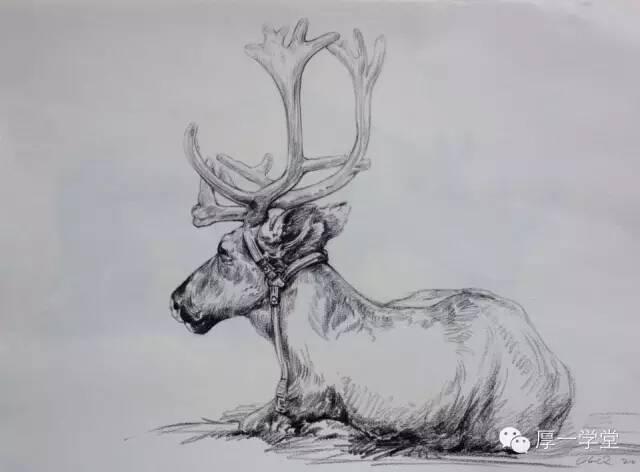 动物速写雕